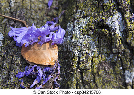 Stock Photography of Jacaranda tree trunk with small flowers and.
