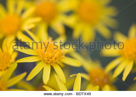 Gelb Stock Photos & Gelb Stock Images.