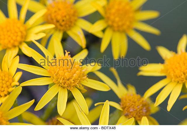 Gelbes Gelb Stock Photos & Gelbes Gelb Stock Images.
