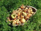 Stock Photography of harvesting time_best time k2350240.