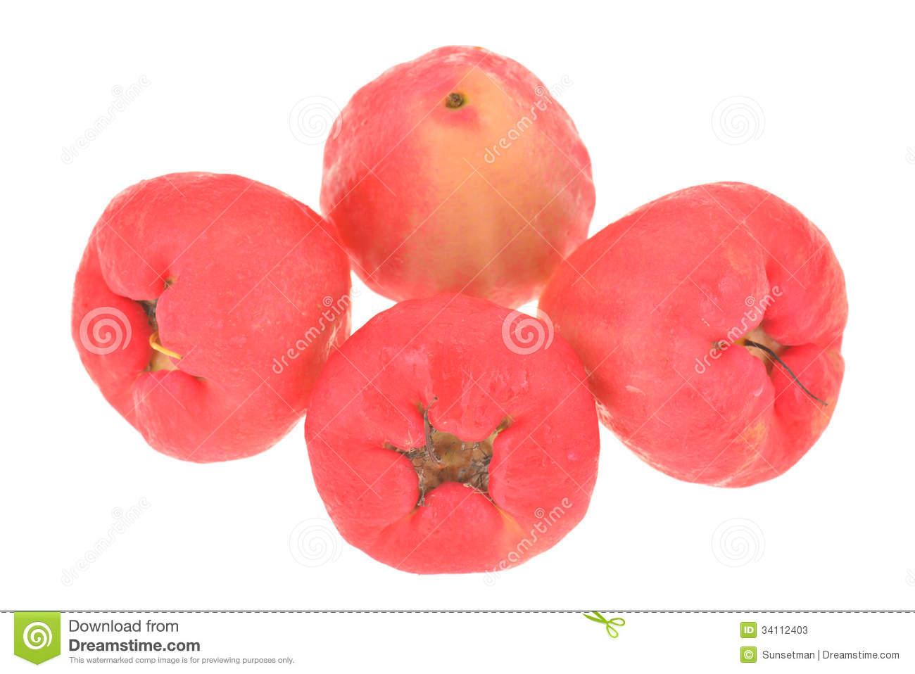 Rose Apple Fruit, Jambu Stock Photos.