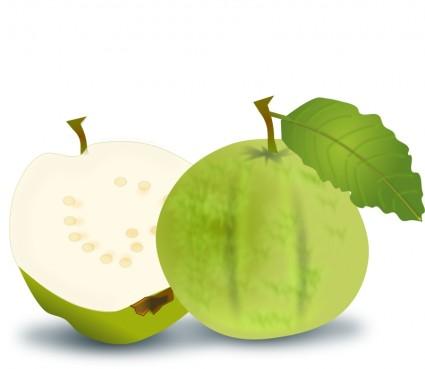Fresh Fruits Vector.