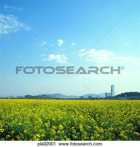 Stock Photography of flower, sky, cloud, Olympics stadium, COEX.