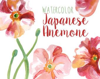 Japanese anemone.