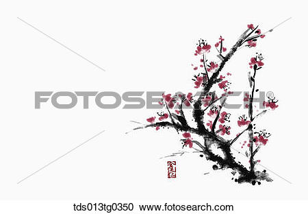 Stock Illustrations of Japanese Apricot Tree in ink painting.