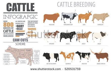 Breed Stock Photos, Royalty.