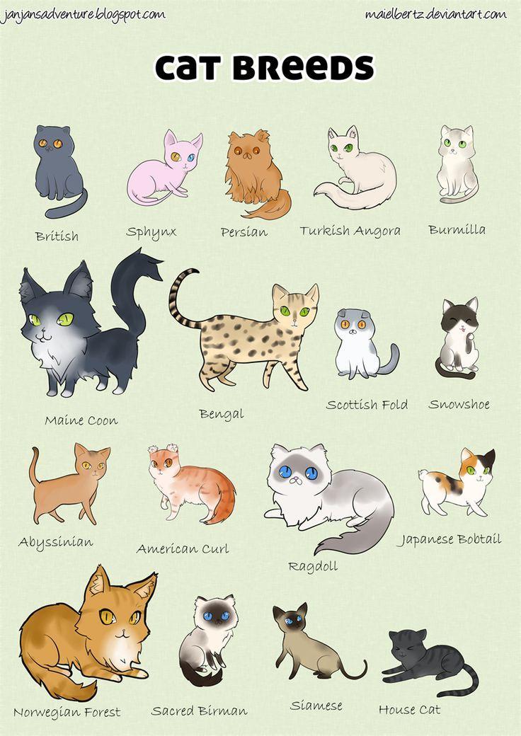 """Über 1.000 Ideen zu """"Cat Breeds List auf Pinterest""""."""