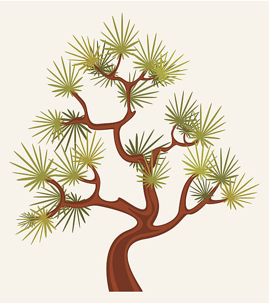 Japanese Cedar Clip Art, Vector Images & Illustrations.