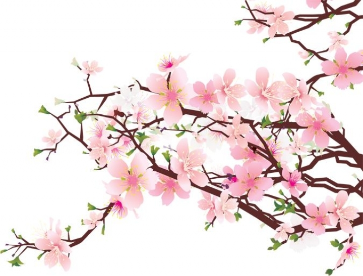 Japanese cherry blossoms clipart #18