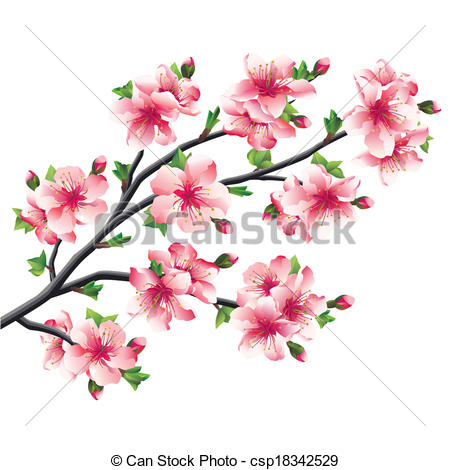 Vector Illustration of Cherry blossoms branch, Japanese tree.