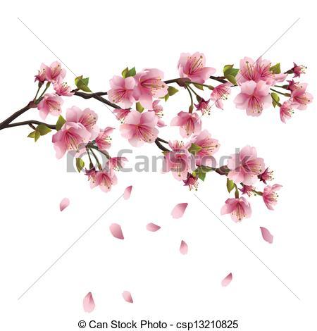 Vector Illustration of Sakura blossom Japanese cherry tree.