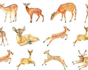 Japan deer.