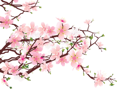 Japanese Flowers on Tree transparent PNG.