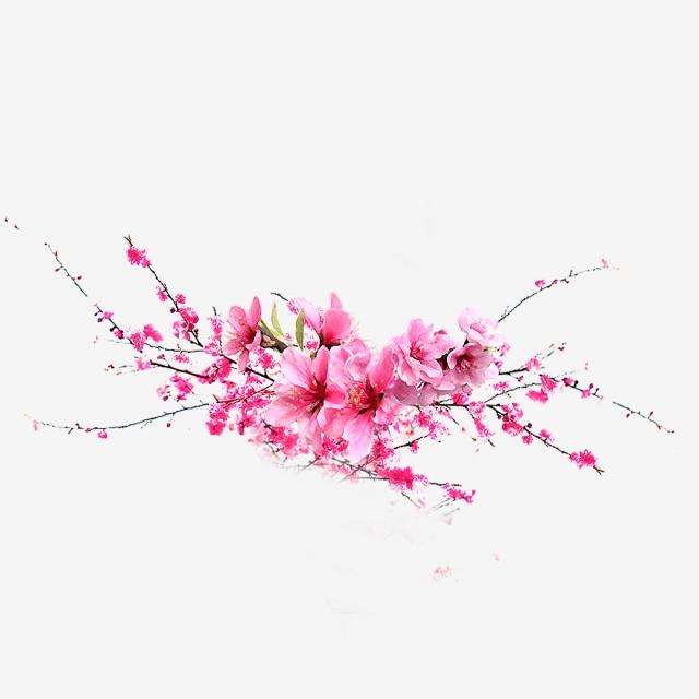 Japanese Pink Flower, Japanese Flower, Pink Flower PNG Transparent.
