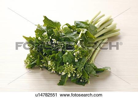 Stock Photography of Flower japanese horseradish u14782551.