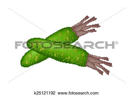 Clipart of Wasabi Root, Also Known as Japanese Horseradish.