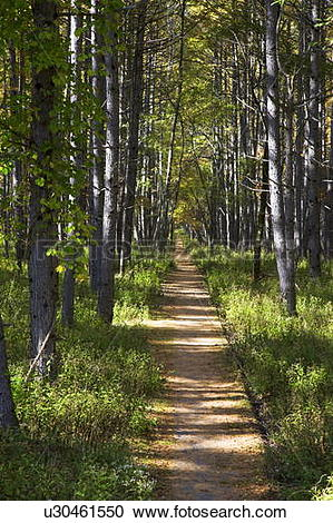 Stock Photography of Path in larch forest, Nikko city, Tochigi.