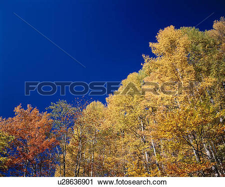 Stock Photography of Autumn trees, Nikko, Tochigi Prefecture.