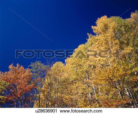 Stock Photography of Autumn trees, Nikko, Tochigi Prefecture.