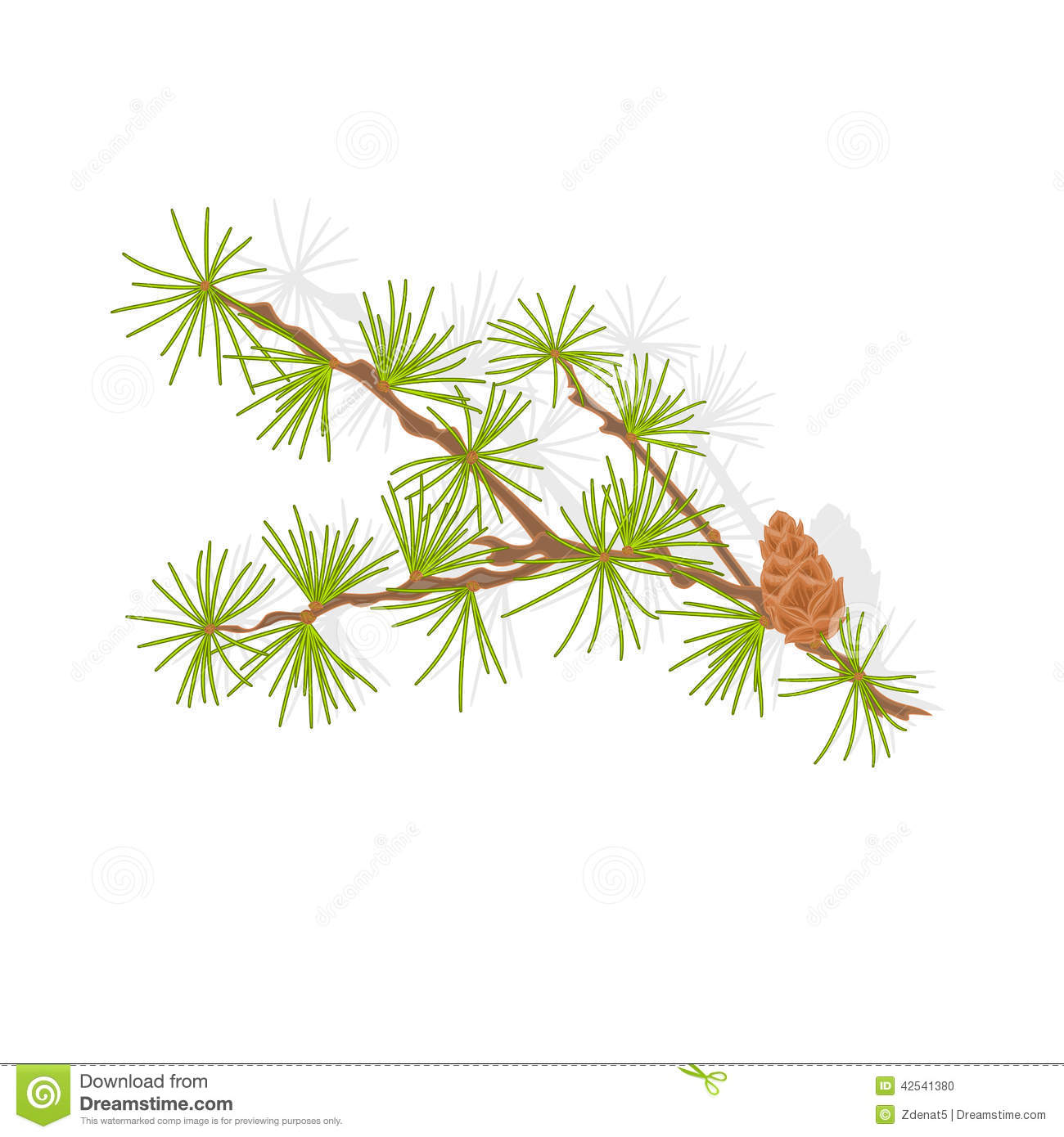 Larch Stock Illustrations.