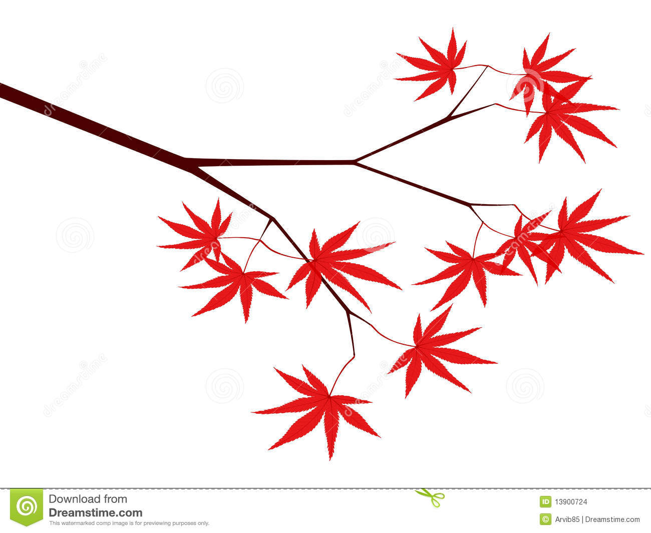 Japanese Maple Stock Illustrations.