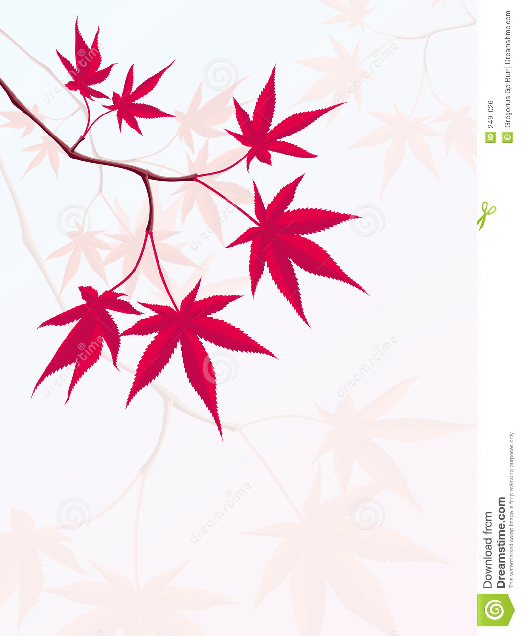 Japanese Maple Royalty Free Stock Image.
