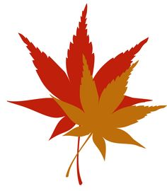 Japanese maple clipart.