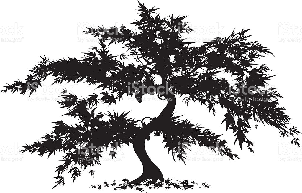 Japanese Maple Tree stock vector art 95380408.