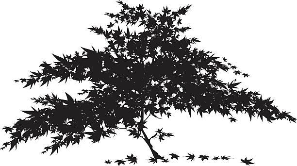 Silhouette Of Japanese Maple Tree Clip Art, Vector Images.