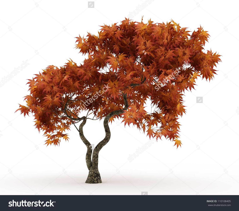 Japanese Maple Tree Clip Art.