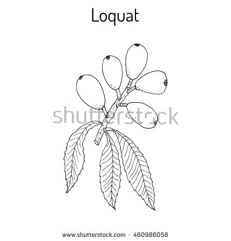 Currant Twig Leaves Drawn Black Ink Stock Vector 431988661.