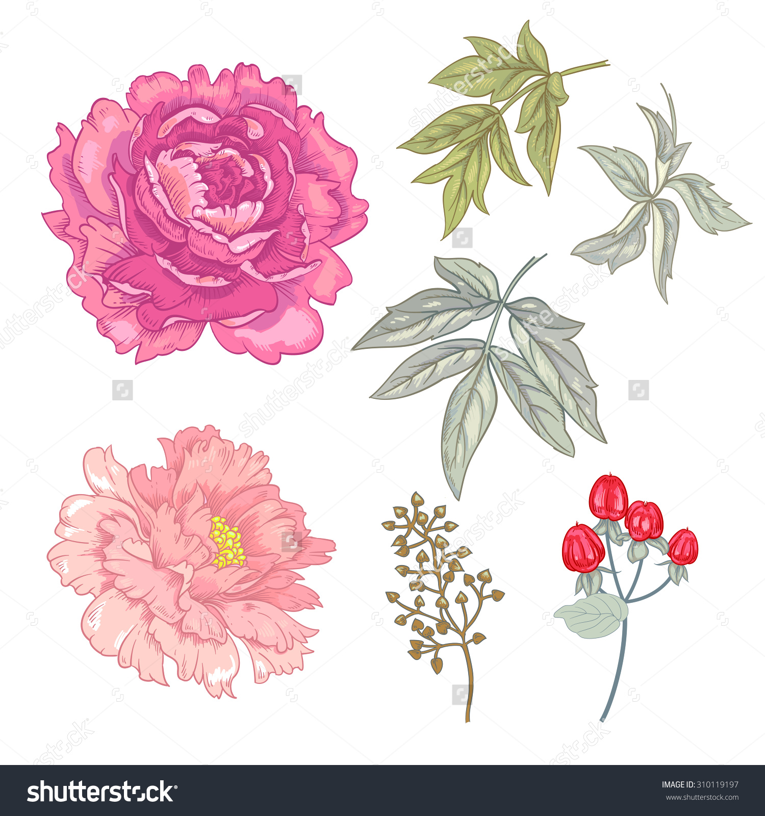 Rose And Peony Clipart.