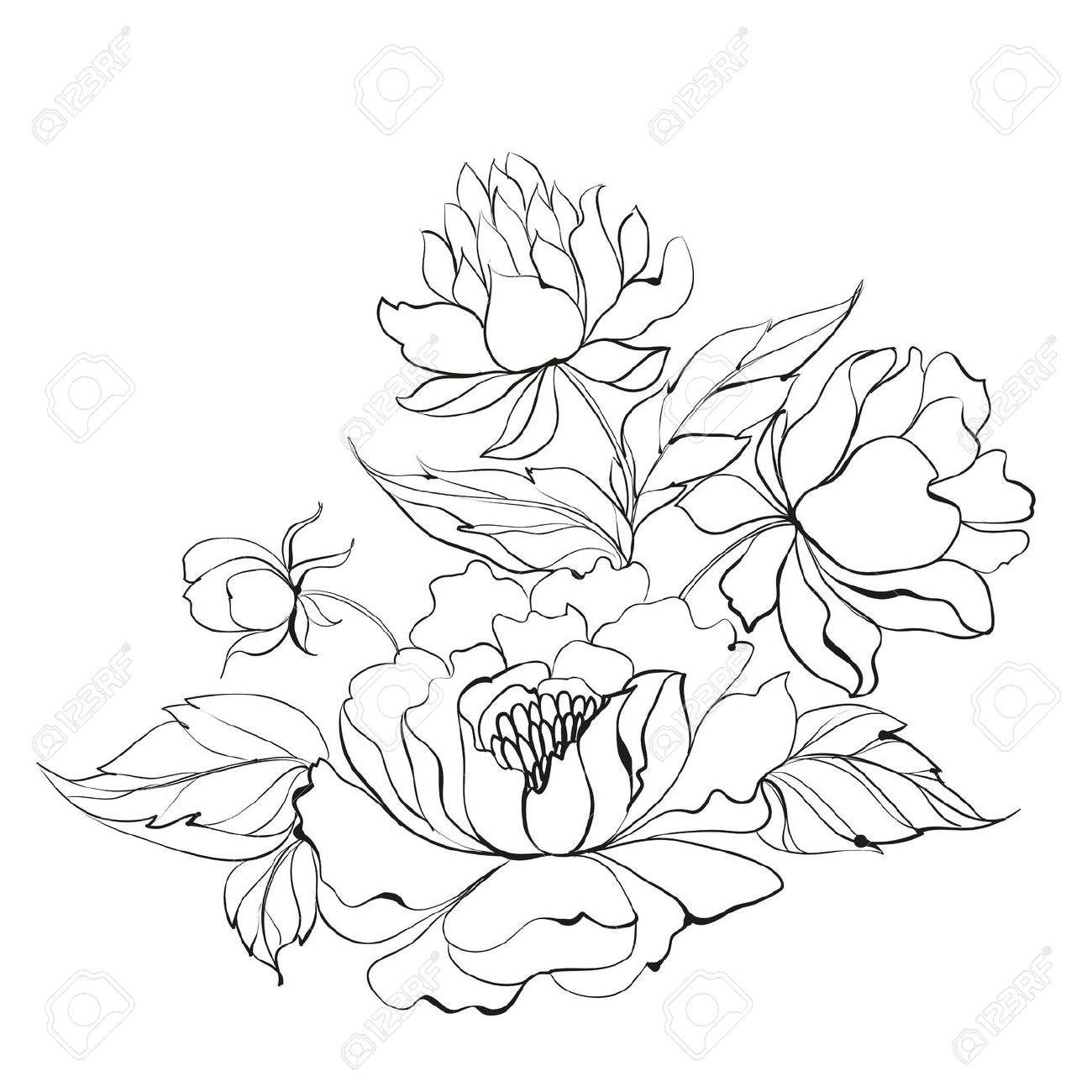 Peony clipart black and white.