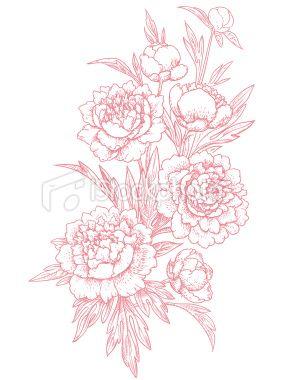 Peonies, clip art Royalty Free Stock Vector Art Illustration.