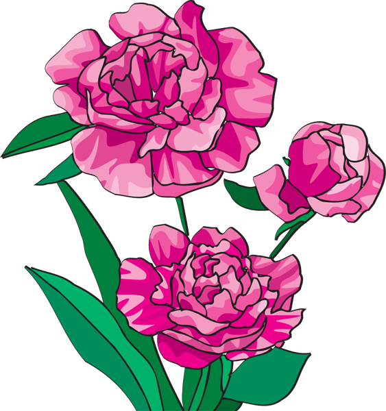 Peony Outline Clipart.