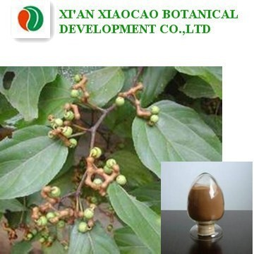 Tree Seeds, Tree Seeds Suppliers and Manufacturers at Alibaba.com.
