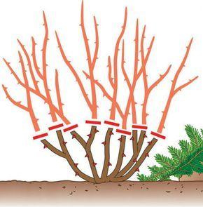 1000+ ideas about Japanische Pflanzen on Pinterest.