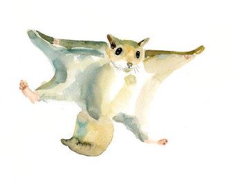 Flying squirrel.