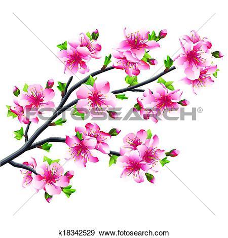Clip Art of Cherry blossoms branch, Japanese tree sakura k18342529.