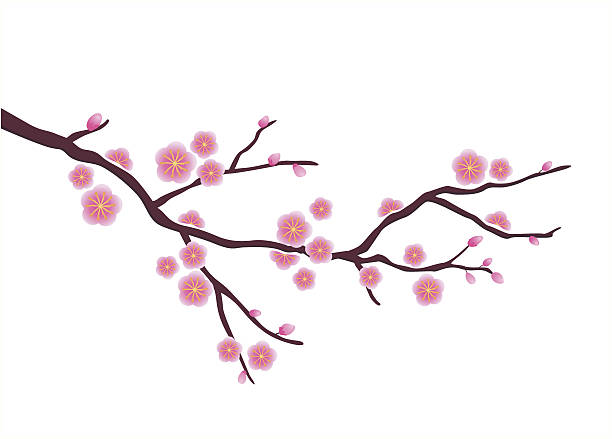 Cherry Blossom Tree Clip Art, Vector Images & Illustrations.