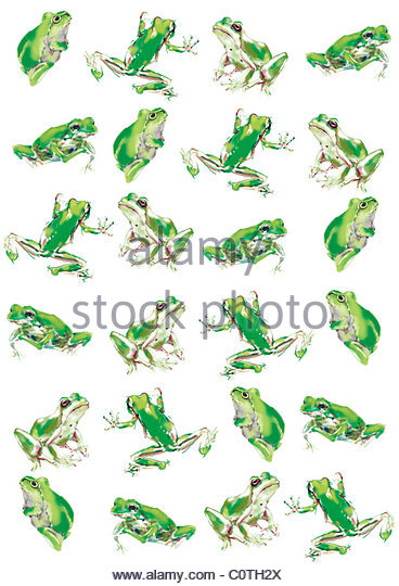Japanese Tree Frog Stock Photos & Japanese Tree Frog Stock Images.
