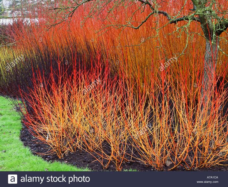 Över 1000 idéer om Salix på Pinterest.