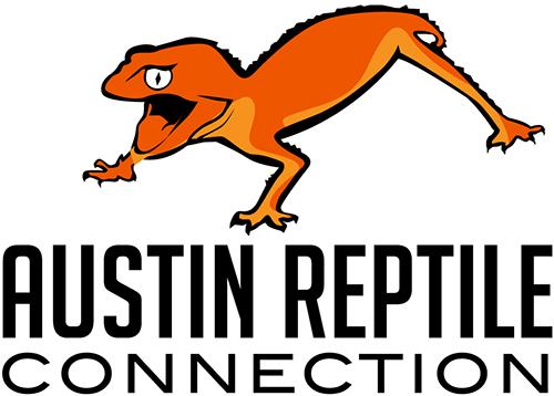 Japanese Cave Gecko (Goniurosaurus orientalis) — Austin Reptile.