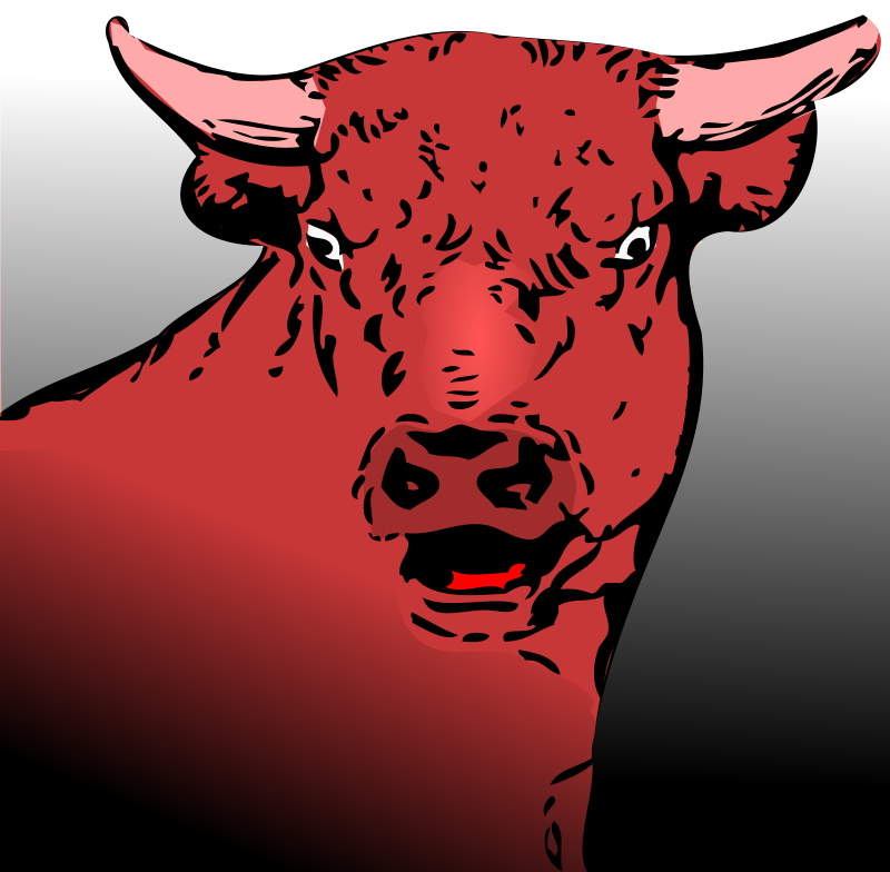 Bull Images Free.