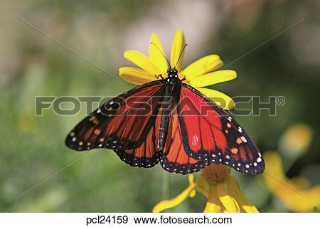 Stock Photograph of Portugal, Lisbon, Jardim Botanico, Butterfly.