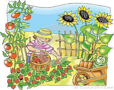 Picking Vegetables Stock Illustrations.