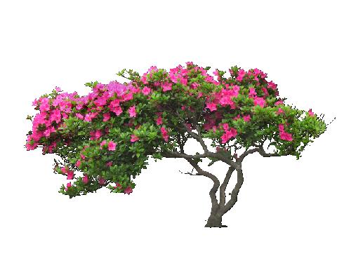 Jardin png » PNG Image.