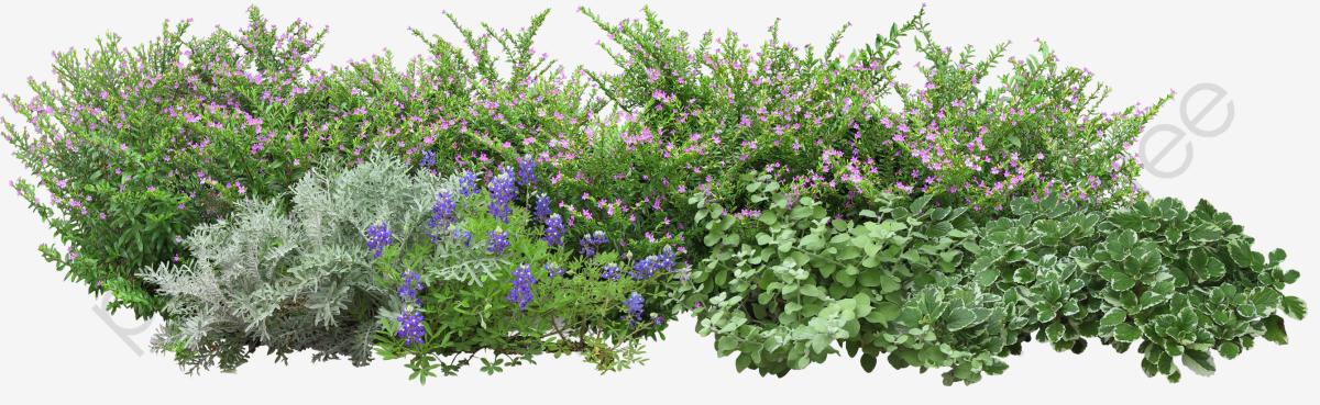 Les Fleurs De L Herbe Jardin Jardin Le Jardin Image PNG pour le.