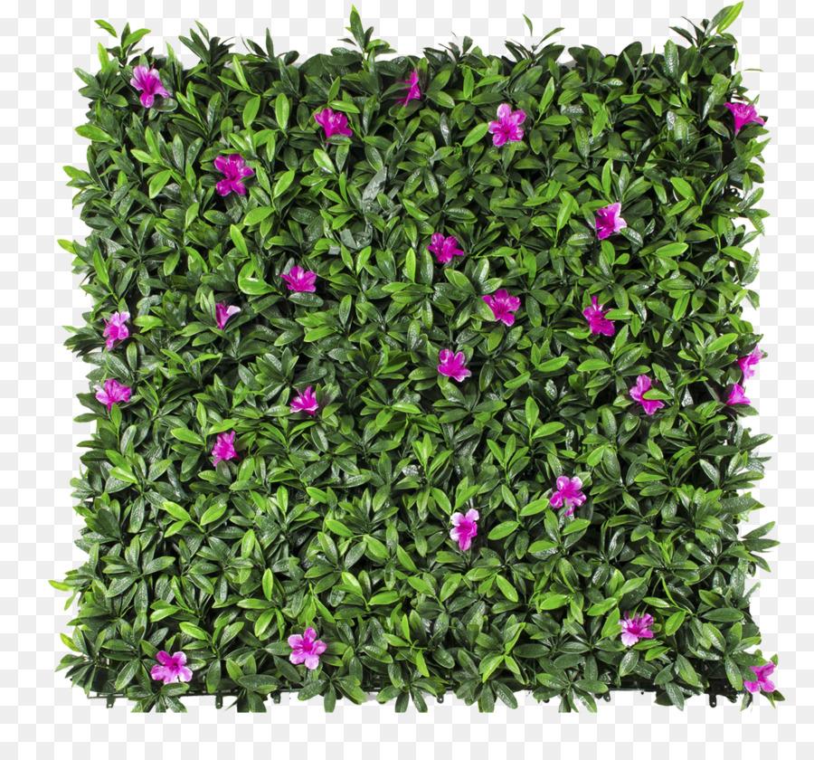Follaje, Pared Verde, Jardín imagen png.