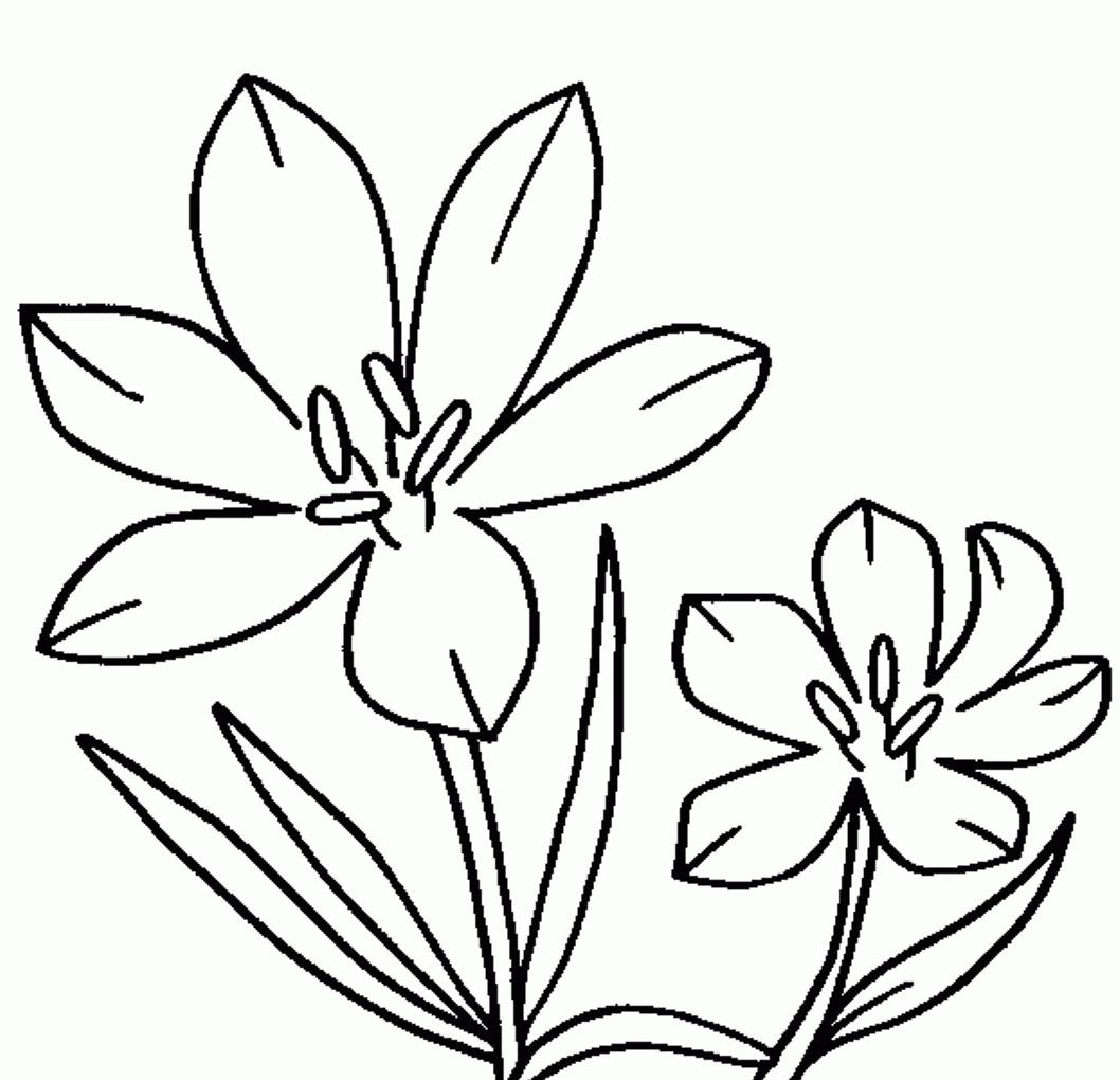 Jasmine Clipart Flower.
